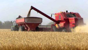 En cuanto a la campaña 2018/19, señaló que Córdoba espera una cosecha de trigo importante, con una estimación de 3.710.000 toneladas, un número que la convertiría en la cuarta mejor cosecha desde que se tienen registros.